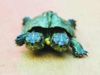 合肥 雙頭龜1-2.jpg