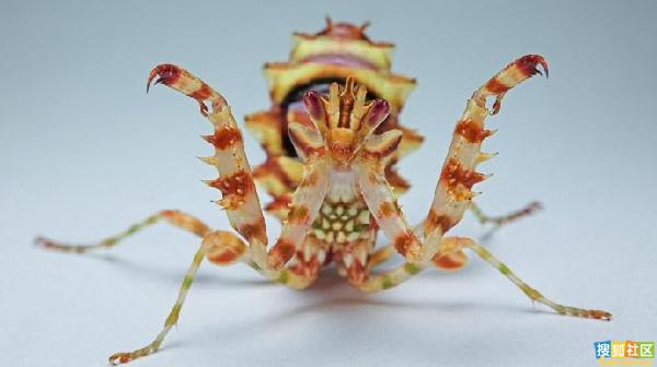 酷似外星生物的動物07.jpg
