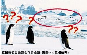 會飛的企鵝1.jpg