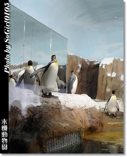 木柵動物園