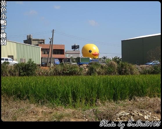 黃色小鴨in桃園