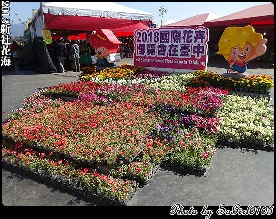 2013新社花海