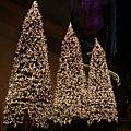 Starhii外面的聖誕樹@2008