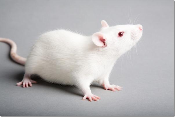 我的小孩不是白老鼠【家有小悟空】2016 多元整合看過動研討會必參加