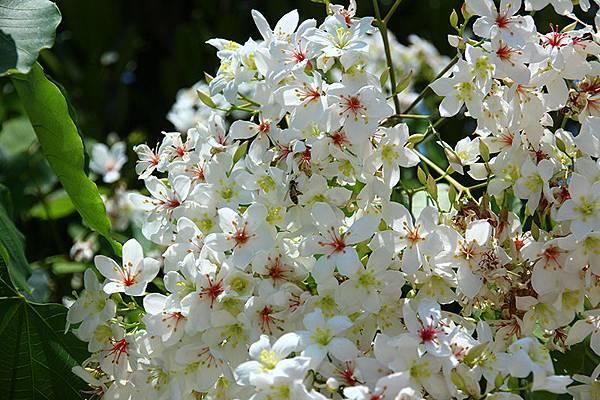 【五月賞螢、油桐花季】夏天旅遊景點,只要抓準時機,到哪都好玩1.jpg