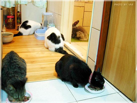 貓貓和阿婆婆_971120-001.jpg