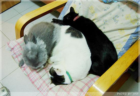 貓兔971121-001.jpg