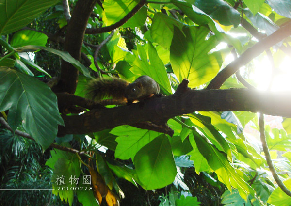 植物園_990228-006.jpg