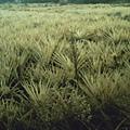 Field4.JPG
