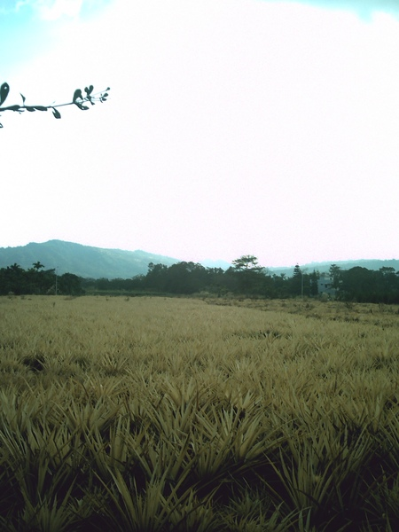 Field7.JPG
