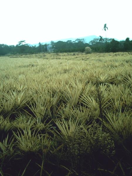 Field8.JPG