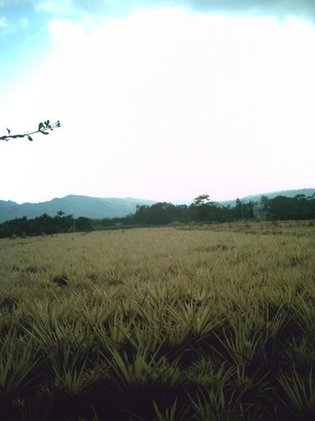 Field9.JPG