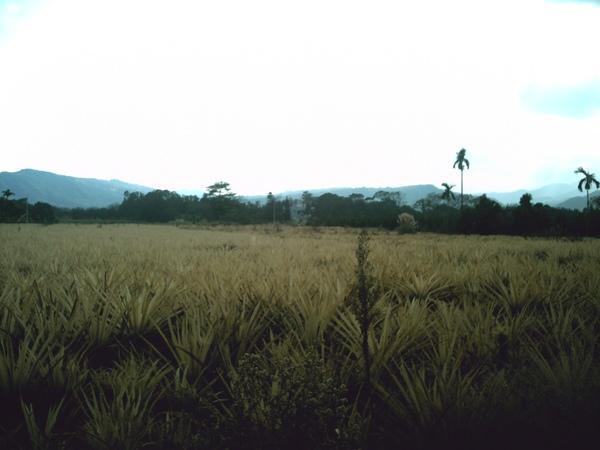 Field10.JPG
