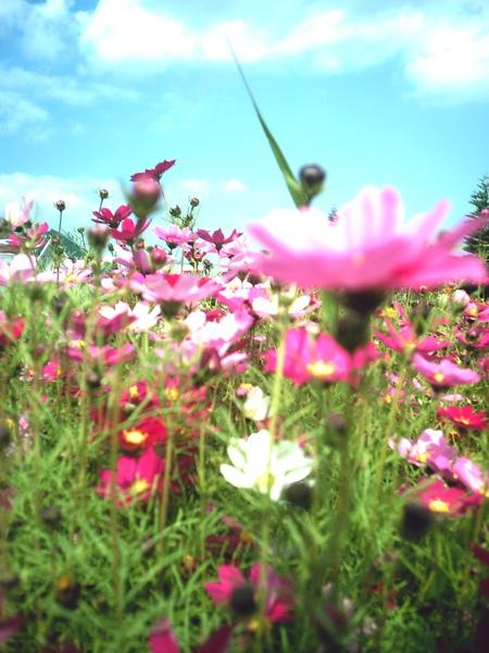 Fleur14
