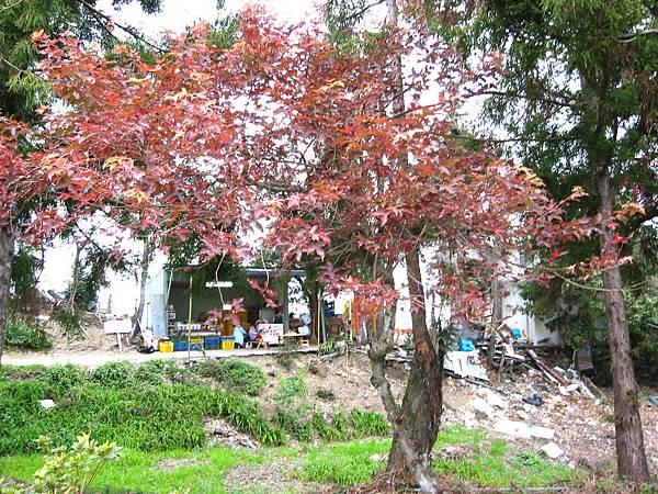 15-17樹
