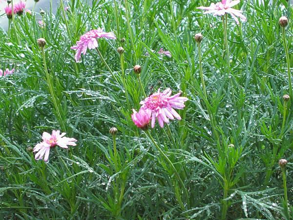 09-43花