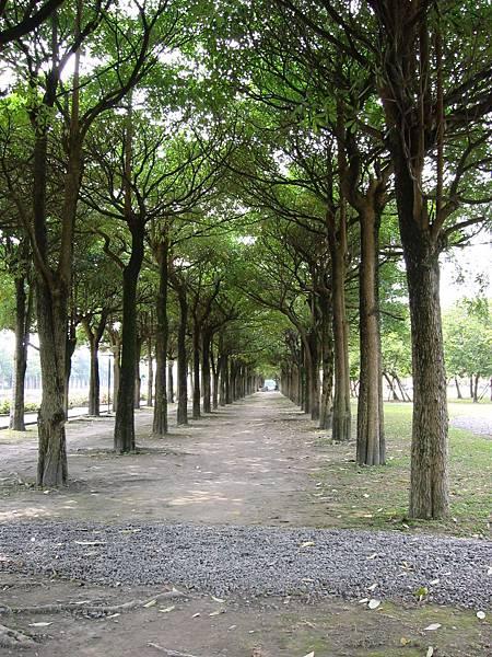 12-56綠色隧道