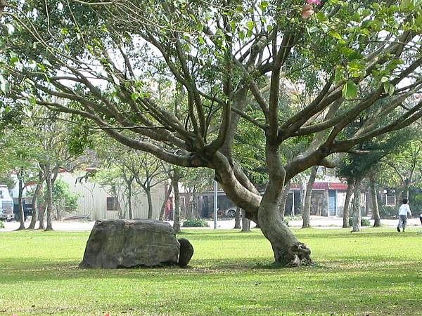 13-12樹和石頭