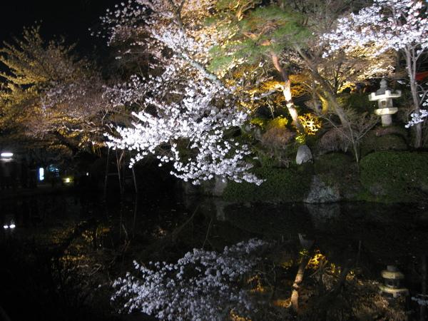 夜櫻.JPG