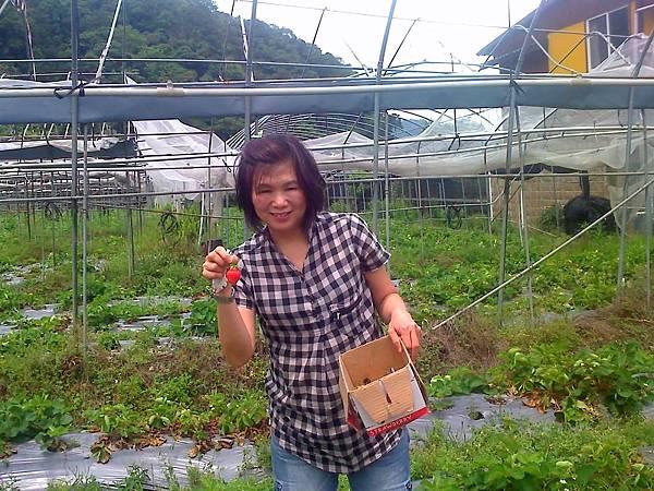 許太太採草莓