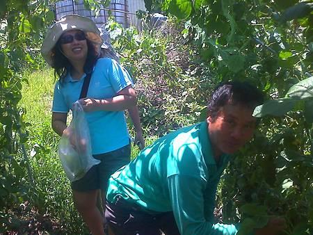 大姊到六哥的農場採醜豆
