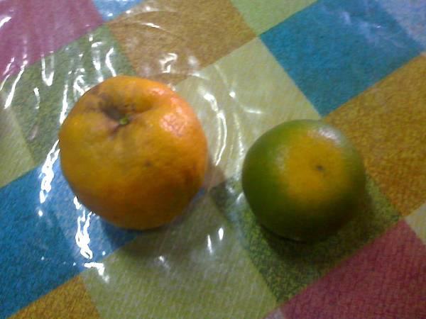 6月19日農場採的橘子