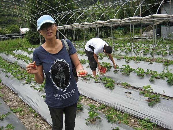 江太太採草莓