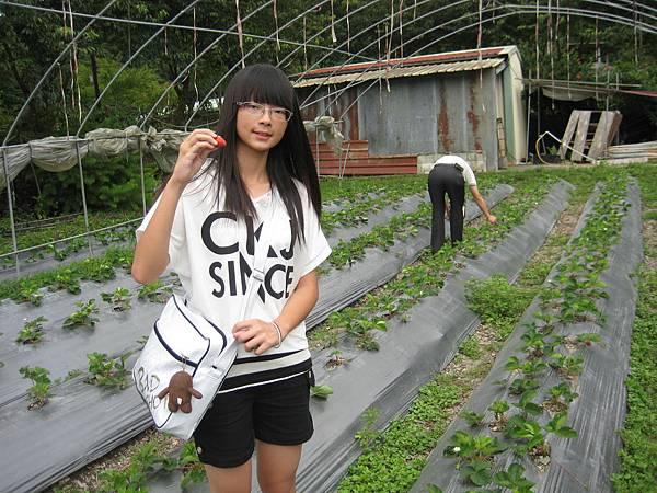 江小妹採草莓