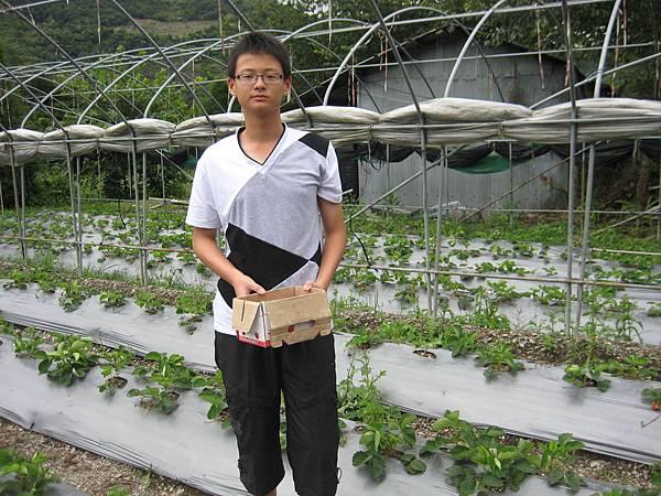 江小弟採草莓