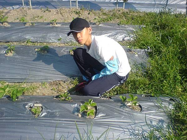 海聲森林中小學揚善任同學體驗農場的工作