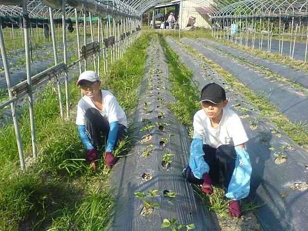 楊鈞凱與楊善任同學體驗農場的工作