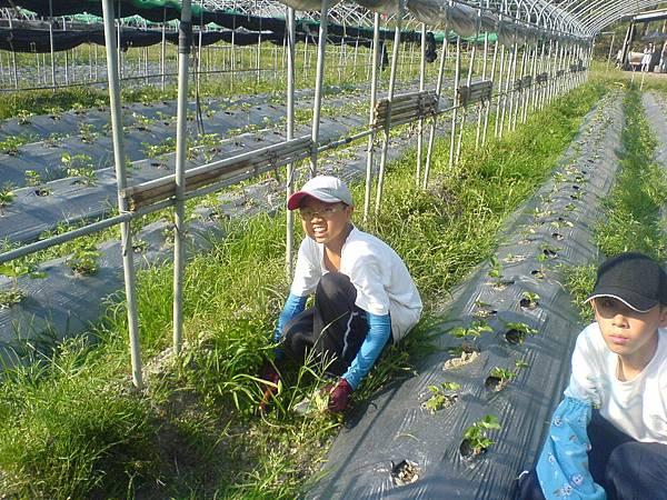 海聲森林中小學楊鈞凱同學體驗農場的工作