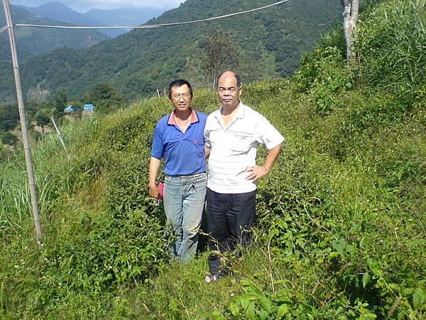 10月23日薛先生夫妻參觀國賓的茶園