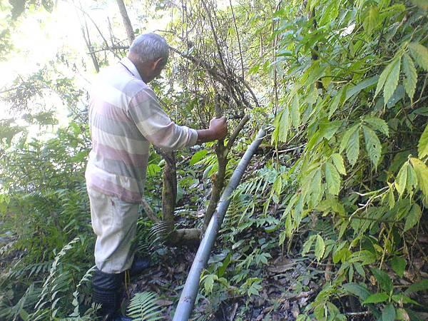 部達用樹幹打樁,固定水管。