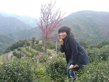 堂妹雅玲參觀茶園