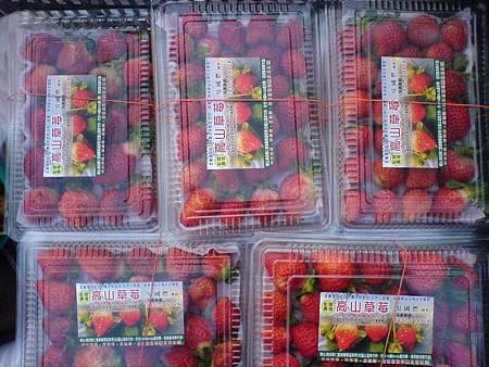 過年採收的草莓