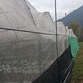 草莓園的防鳥網完成