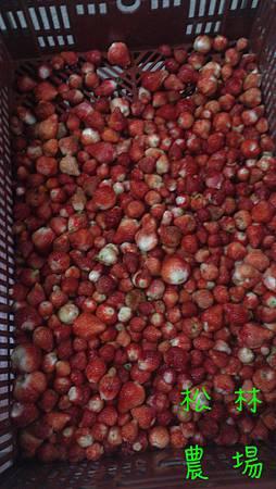 瀝乾的草莓