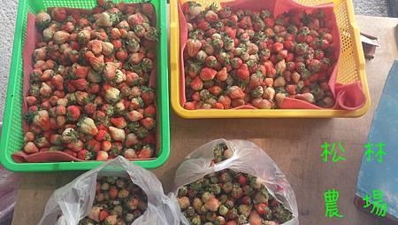 一天只有採這些草莓,損耗一大堆[袋子 裝]