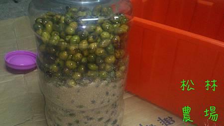 台灣土橄欖製作酵素