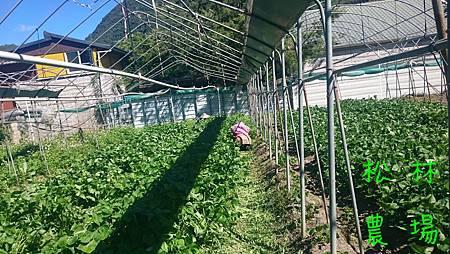 紅豆區除草