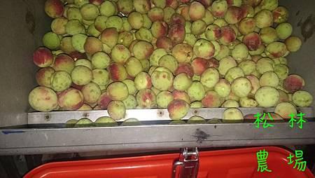 水蜜桃做酵素