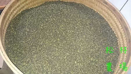 5月21日開始烘培今年的烏龍茶