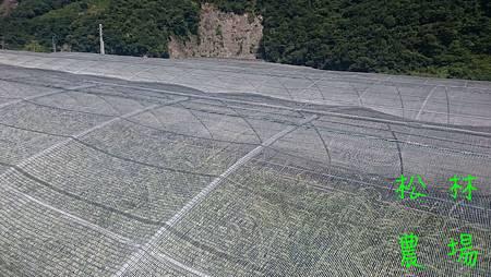 小米區圍防鳥網