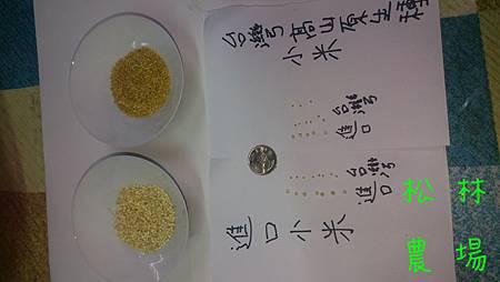台灣的和進口的小米比較