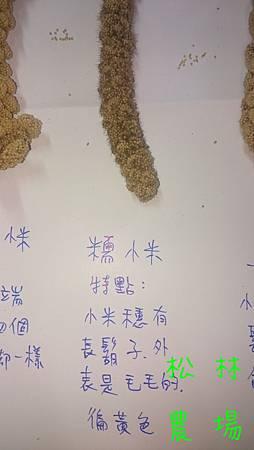 高山原生小米品種簡介