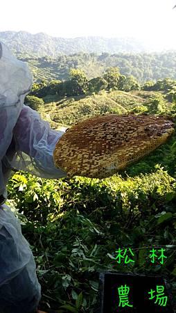 5月27日到深山採朋友司令的野蜂蜜