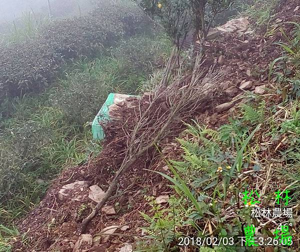松林農場20180203山豬又來破壞