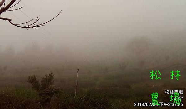 松林農場20180203寒流