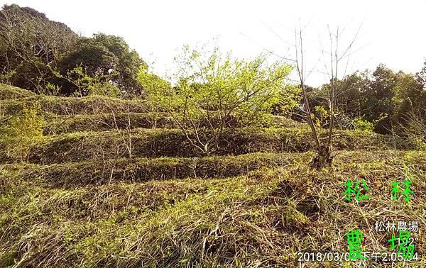 松林農場20180302種黑肉豆
